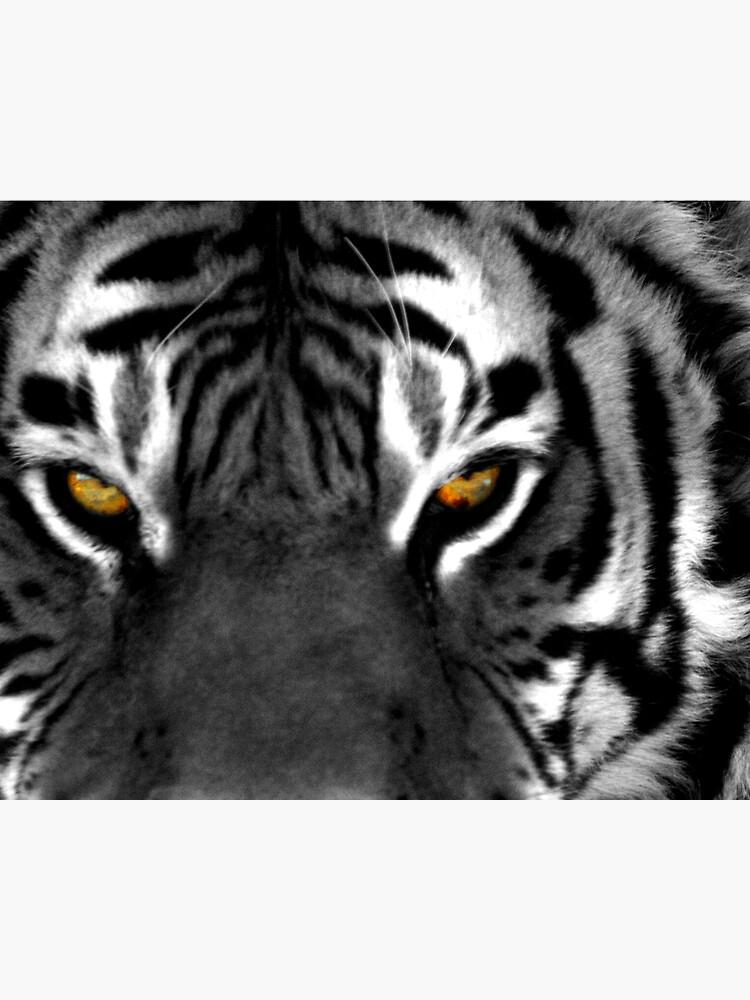 Tiger Eyes I by JandMPhoto