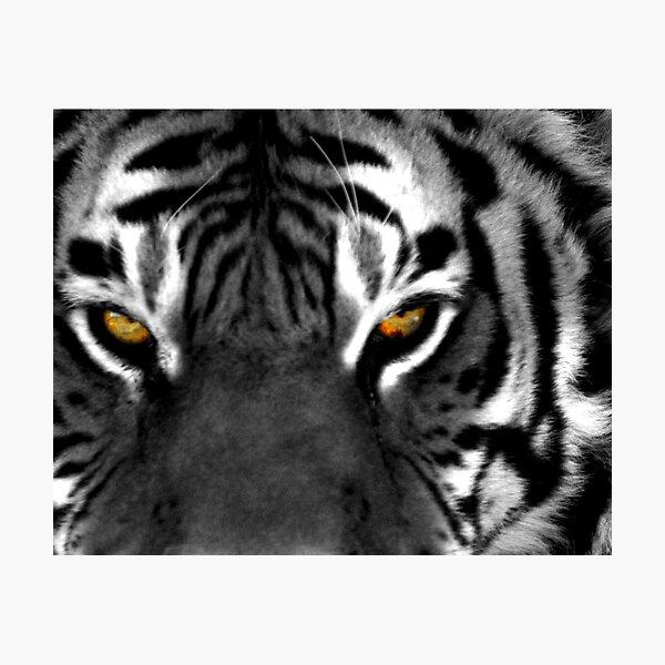 Tiger Eyes I Photographic Print