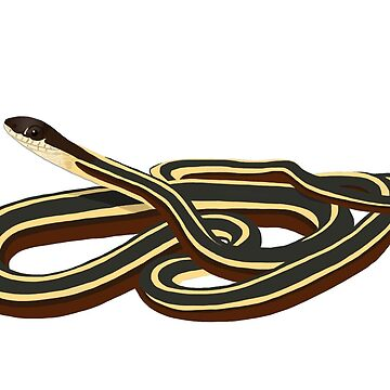 Ribbon Snake Design by wildlifeandlove