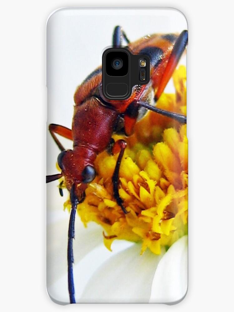 Beautiful Beetle On a Flower by Heavenandus777