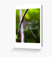 Dragonfly #4 Greeting Card
