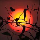 Sunrise by Steve Bullock