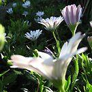 Purple Flowers #2 by Roselynn