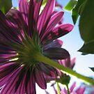 Purple Flowers #1 by Roselynn