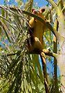 Goodfellow's Tree-Kangaroo by Jason Asher