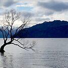 Wanaka Tree Silhouette by Kathie Nichols