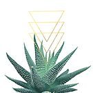 Succulent geometric by Gale Switzer