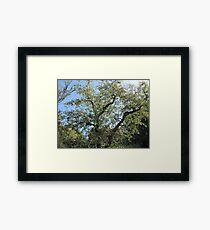 Summers Day in Ireland Framed Print