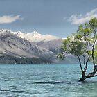 The Wanaka Tree  ( 1 ) by Larry Davis