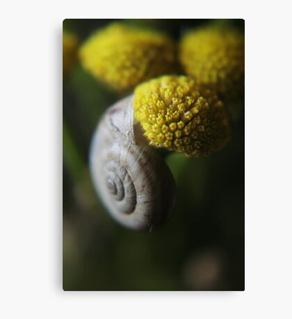 Snail (from wil flowers collection)  Canvas Print