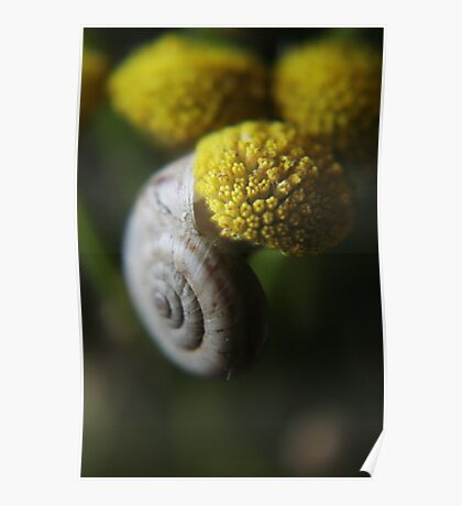 Snail (from wil flowers collection)  Poster