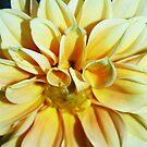 yellow beauty by natnvinmom