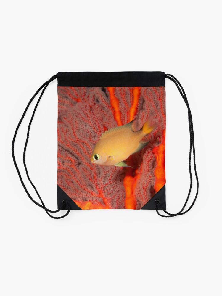 Alternate view of Dark-fin Chromis, Papua New Guinea Drawstring Bag