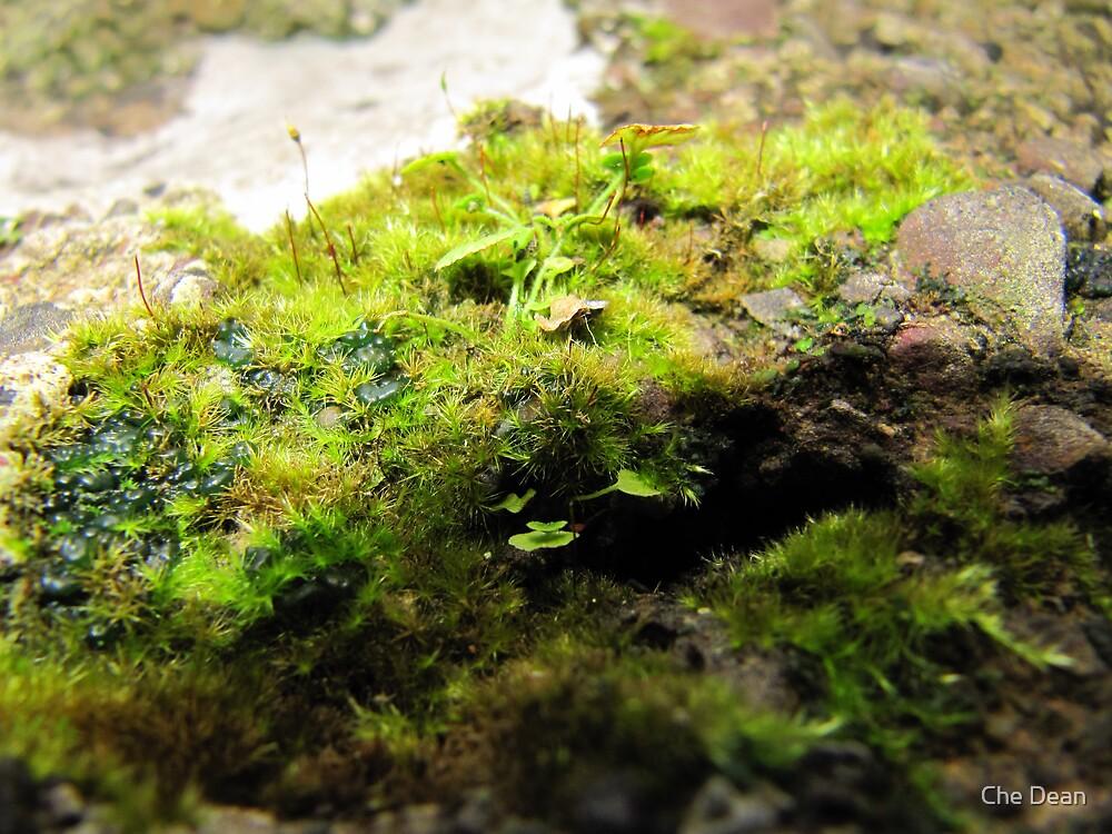 Garden in Miniature by Che Dean