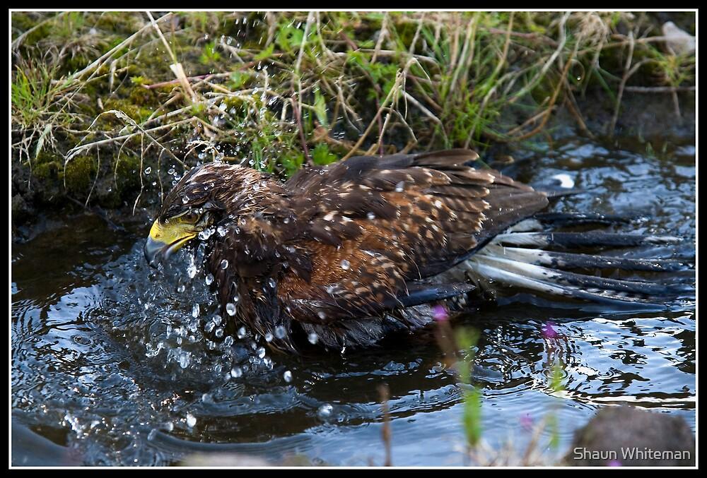 Splish splash I am having a bath!! by Shaun Whiteman