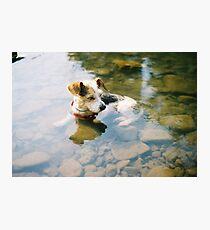 I'm The Coolest Dog Around Photographic Print