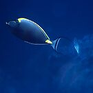 The Orangespine Unicornfish And The Deep Blue Sea by hurmerinta