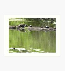 Turtles on a Log Art Print