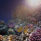 Glorious Light In The Red Sea Underwater World by hurmerinta