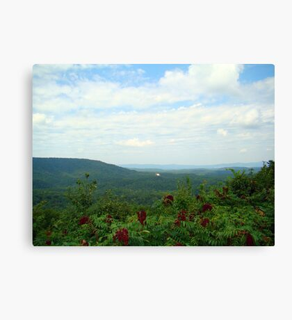 Small Piece of Cheeha State Park Canvas Print