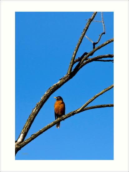 Robin in Tree by Christina Rollo