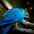 Blue Bird by gmanchi