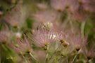Pink Delight by Vicki Pelham