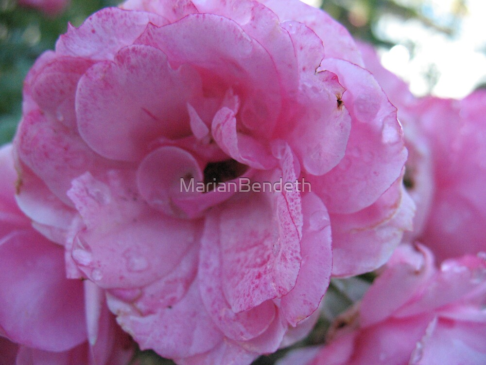 Tissue-Paper Pink Rose by MarianBendeth