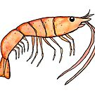 Prawn: Fish of Portugal by Best Fish Boutique