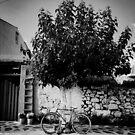 Tree Wheeler by rorycobbe