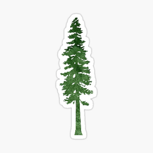 redwood tree Sticker