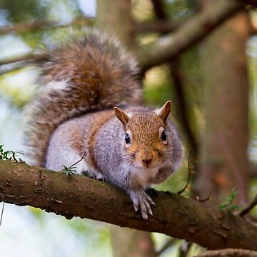 Squirrel by captureasecond