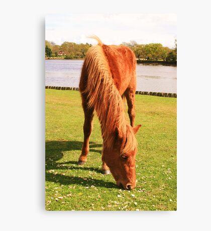 Ginger Pony Canvas Print