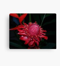 Torch Ginger Canvas Print