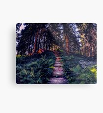 Ohme Steps Metal Print