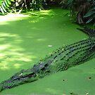 Swamp Monster by Josh Prior