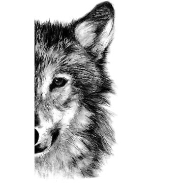 Gray wolf Drawing Pencil Sketch by JoeEgy