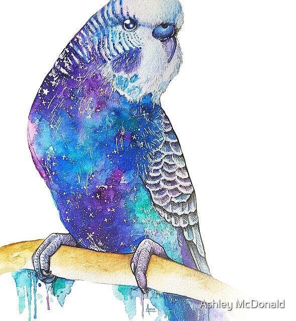 « Peinture aquarelle cosmique budgie » par Ashley McDonald