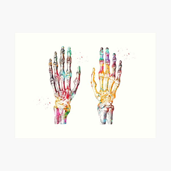 Hand Muscles Art Print