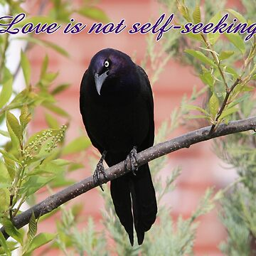 Love is not self-seeking by hummingbirds