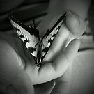 Butterfly Hands by Joan Smart