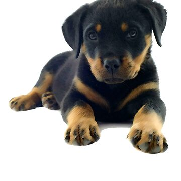 Rottie Baby by theboonation