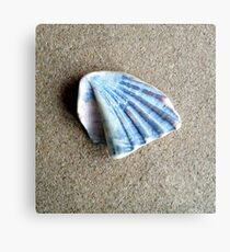 Just a Shell. Metal Print