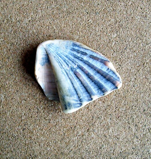 Just a Shell. by John  Smith