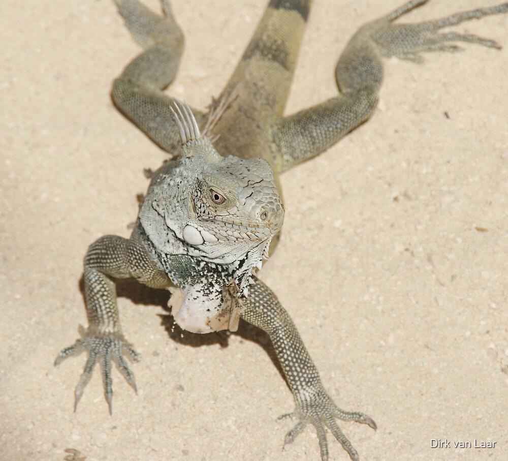 iguana2 by Dirk van Laar