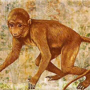 Brown Climbing Jungle Monkey by designsbycclair