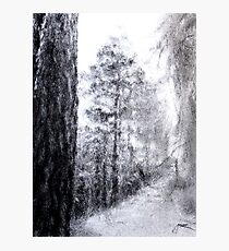 Pine Tree Forest Charcoal Drawing Photographic Print