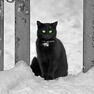 SNO-CAT by Tsitra