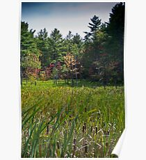 Fall Glade Poster