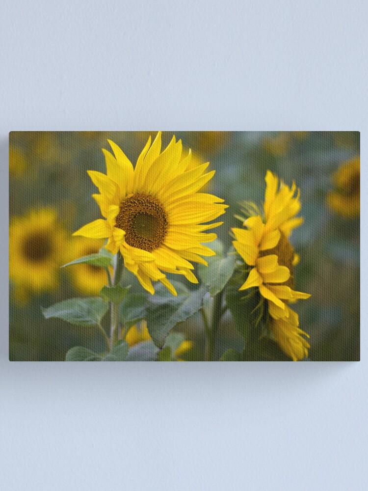 Alternate view of Sunflowers Canvas Print